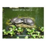 03-21-10 246, Ormond Strand, Florida, Soakin oben… Postkarte
