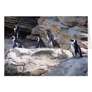 104_3669 - Pinguin-Postkarte Karte