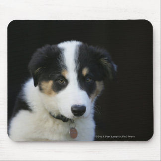 12 Wochen-alter Border-Collie-Welpe Mauspads