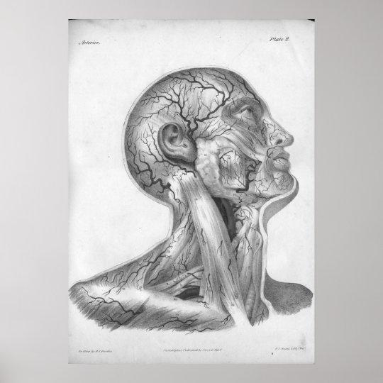 1854 Vintager Kopf-u. Hals-Arterien-Anatomie-Druck Poster | Zazzle.ch