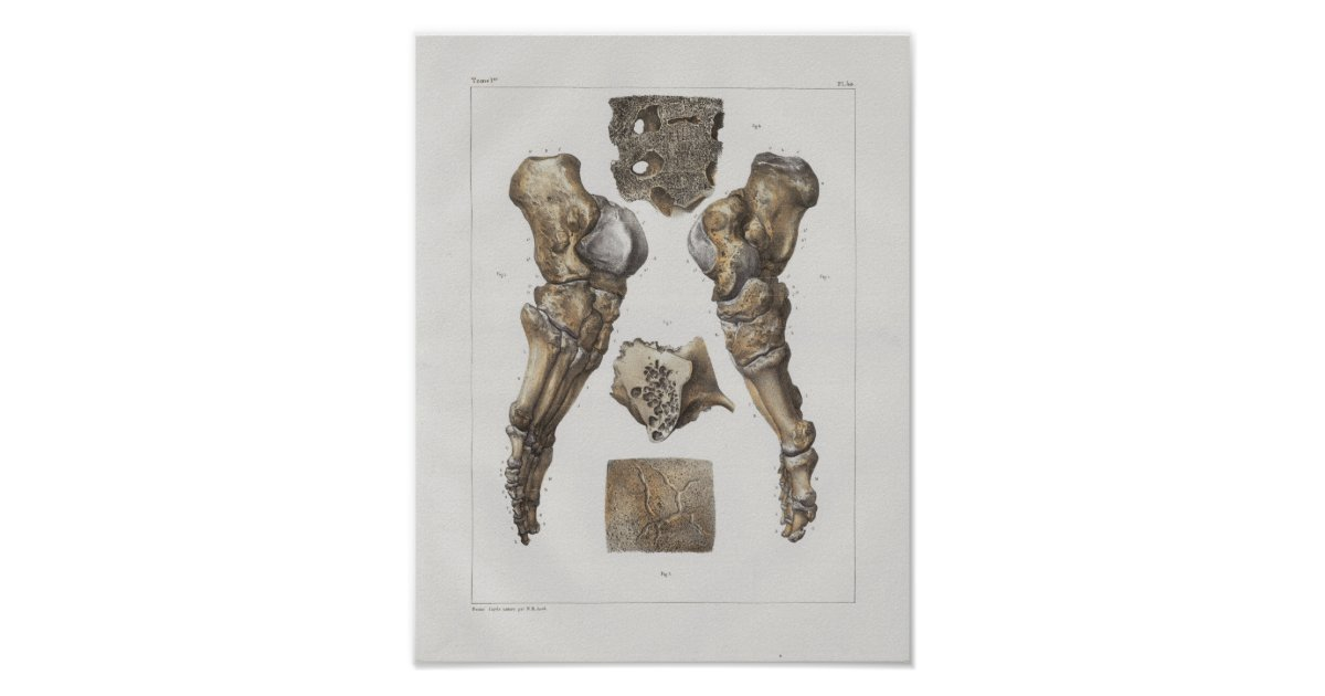 1867 Fuß-Knöchel-Knochen-Vintager Anatomie-Druck Poster | Zazzle.ch