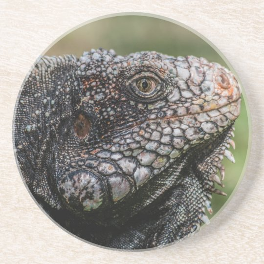 1920px-Iguanidae_head_from_Venezuela Getränke Untersetzer