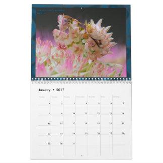 2017 mittlerer/großer MANTIDFORUM Kalender