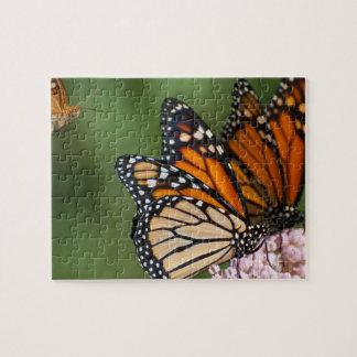 2 Monarchen auf Milkweed-Fotopuzzlespiel