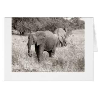 3 Elefanten in einer Feldkarte Karte