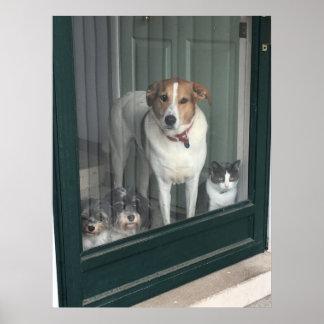 3 Hunde und eine Katze Poster