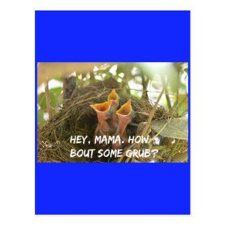 3 hungrige Vogelbabys im Nest Postkarte