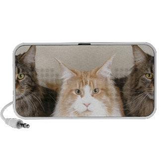 3 niedliche Kätzchen Speaker