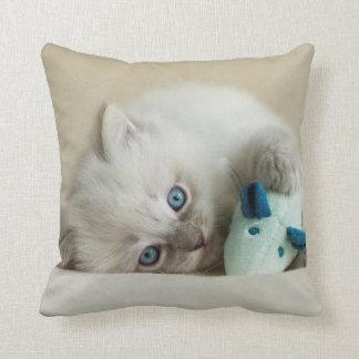 6 Woche altes Ragdoll Kätzchen Kissen