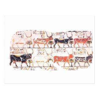 8 Kühe Postkarte