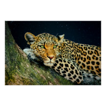 A Leopard's Gaze - Night Sky Print