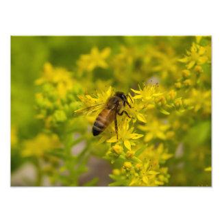 Abeille jaune Maleny 2016 de fleur et de miel Photographies