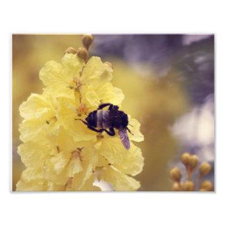 Abeille sur une fleur jaune photos