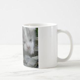 Abenteuer-Kätzchen Tasse