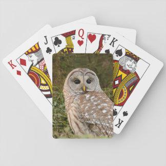 Abgehaltene Eulen-Spielkarten Spielkarten