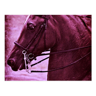 Abgetöntes Saddlebred Postkarte