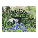 Accueil de Bluebonnet de Texas Cartes Postales