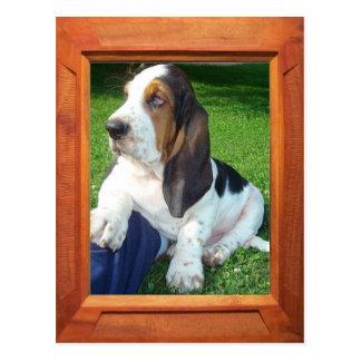 Addieren Sie Ihren Foto Dachshund-Jagdhund Postkarte