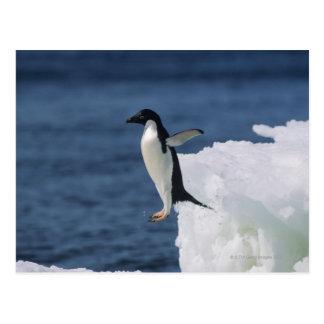 Adelie-Pinguin, der vom Eisberg springt Postkarte