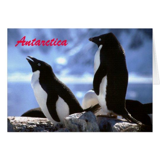 Adelie-Pinguine in die Antarktis-Gruß-der Karte