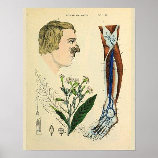 Ader-Muskel-Bein-Fuß-Anatomie-Kunst-Druck Poster | Zazzle.ch