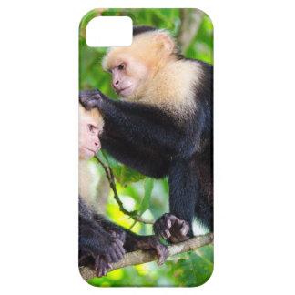 Affe-Liebe iPhone 5 Case