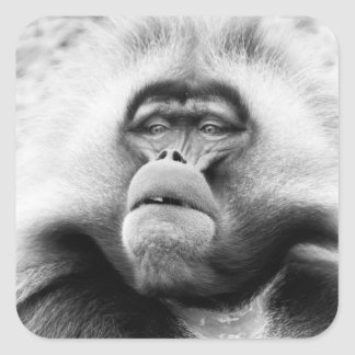 Affe Quadratischer Aufkleber