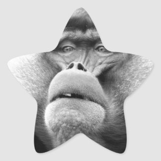 Affe Stern-Aufkleber
