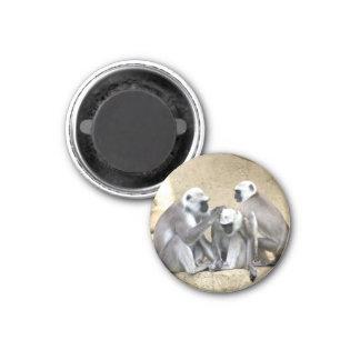 Affe-Trio-Magnet Runder Magnet 3,2 Cm
