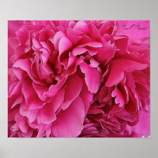 """Affiche d'impression de toile """"de Peoni rose"""""""