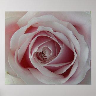 Affiche sensible d'impression de toile de rose de