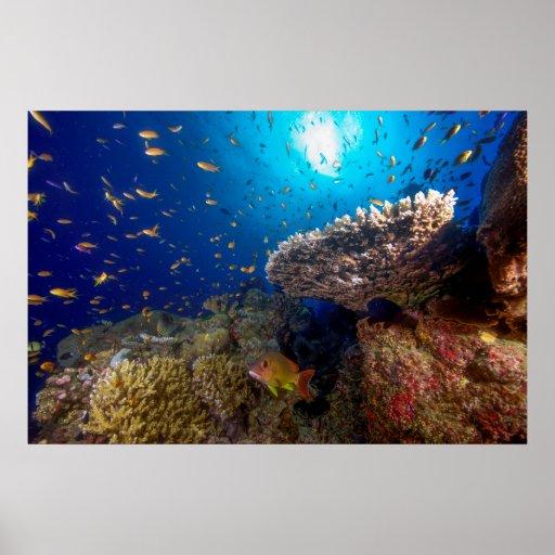 Affiche tropicale de poissons de mer de corail
