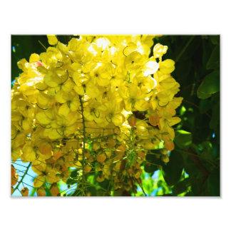 Affiche tropicale jaune de fleurs photographes