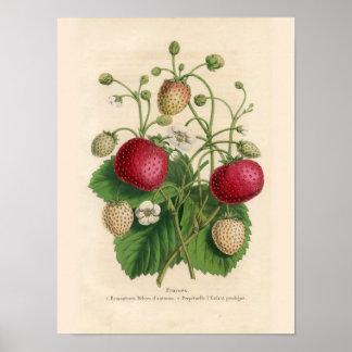 Affiche vintage de fraises