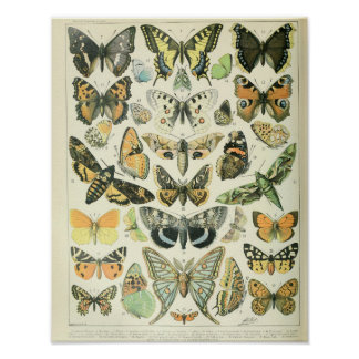Affiche vintage de papillon poster