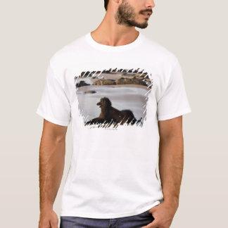 Afghanischer Hund im Strand von Deba, Guipuzcoa, T-Shirt