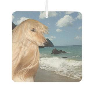 Afghanischer Jagdhund am Strand Lufterfrischer