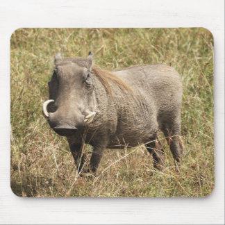 Africa - Nasenschwein Mousepads
