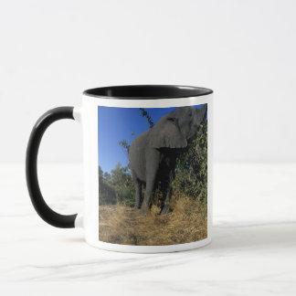 Afrika, Botswana, Chobe Nationalpark, Elefanten Tasse