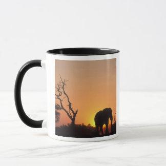 Afrika, Botswana, Chobe Nationalpark, stellend ein Tasse