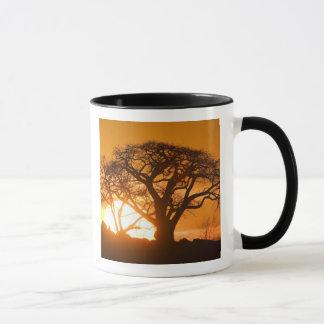 Afrika, Botswana, Einstellungssonne-Silhouetten Tasse