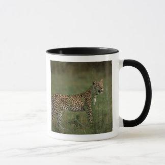 Afrika, Botswana, Okavango Dreieck. Leopard Tasse