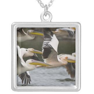 Afrika. Kenia. Weiße Pelikane im Flug in See Versilberte Kette