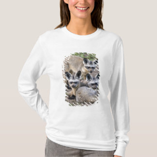 Afrika. Tansania. Schläger-Ohrige Füchse bei Ndutu T-Shirt