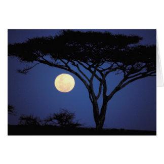 Afrika, Tansania, Tarangire. Akazienbaum herein Karte