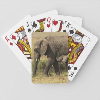 Afrikanische Elefanten Spielkarten