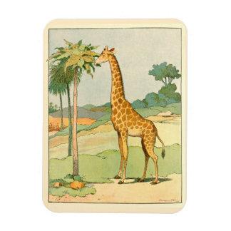 Afrikanische Giraffe, die Akazien-Blätter isst Magnet