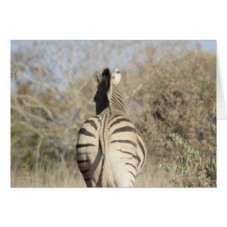 Afrikanische Zebraanmerkungskarte Karte