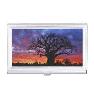 Afrikanischer Baobabbaum, Adansonia digitata, 2 Visitenkarten Etui
