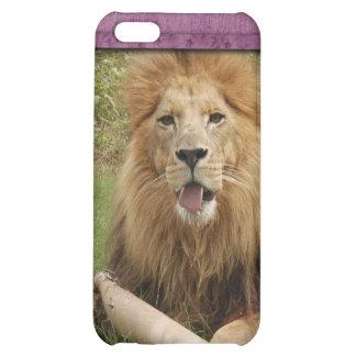 Afrikanischer Löwe-Speck-Kasten